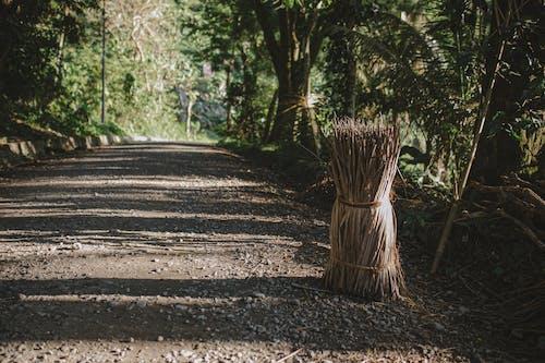 Immagine gratuita di alba, albero, ambiente, campagna