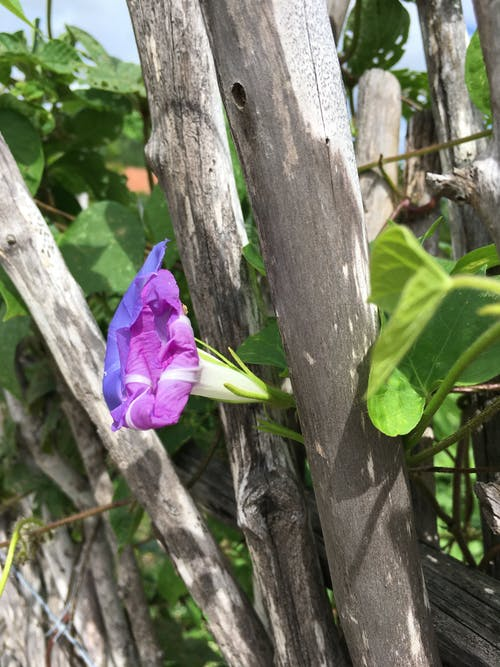 Photos gratuites de amante da natureza, nature