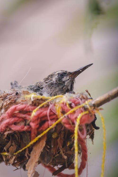 Free stock photo of bird, bird cage, bird chirping
