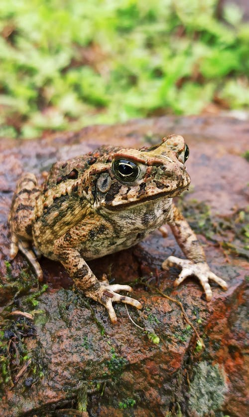 Spotted toad on mossy stone in summertime