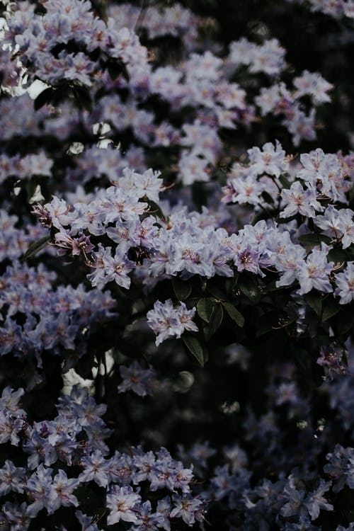 Бесплатное стоковое фото с декорация, красивые цветы, лепесток, лето