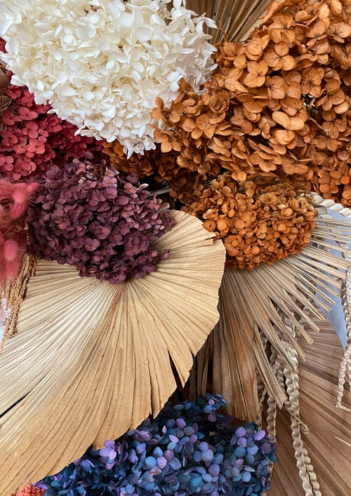 Free stock photo of beautiful flower, bouquet of flowers, dried flower, dried flowers