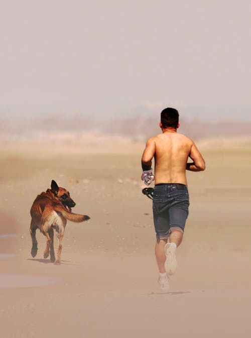 Back view of anonymous shirtless runner jogging with purebred dog on dry terrain in daylight