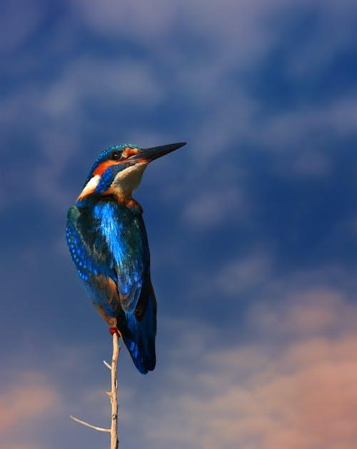 Безкоштовне стокове фото на тему «aan lichtbak toevoegen, coraciiformes, барвистий»