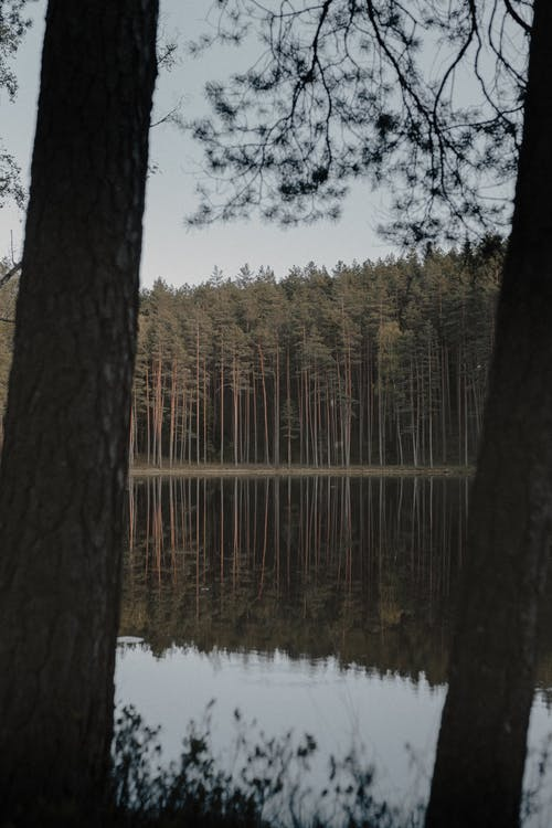 Darmowe zdjęcie z galerii z drewno, drzewo, drzewo iglaste, jesień