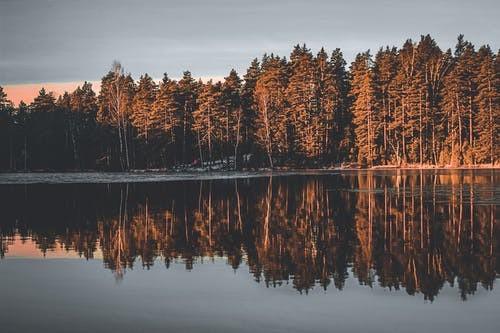 Calm lake surrounded by lush coniferous forest at sundown