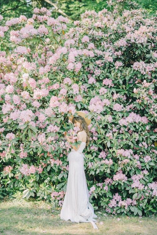 คลังภาพถ่ายฟรี ของ กลางแจ้ง, การแต่งงาน, กำลังบาน