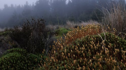 From above of common haircap moss growing in valley amidst green lush forest on foggy day