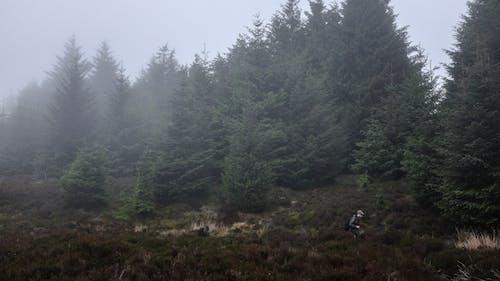 Základová fotografie zdarma na téma cestování, déšť, dřevo, hora