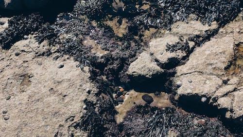 Gratis stockfoto met abstract, abstracte vormen, blubber, bodem