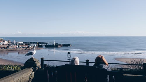 People Sitting on Wooden Bench Near Sea