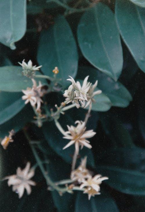 Kostnadsfri bild av blå och grön, blad, blomma, fjäder