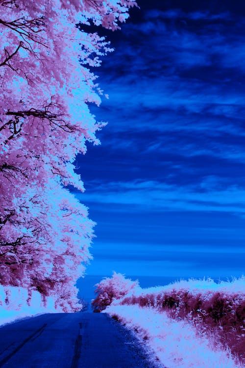 Kostnadsfri bild av alba, explorer panda, infraröd fotografering, landskap
