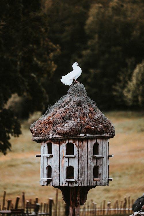 คลังภาพถ่ายฟรี ของ bílá, bílý a černý, holub, priroda