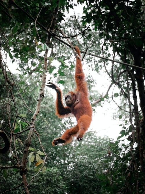 Foto profissional grátis de adulto, ameaçado de extinção, animais selvagens