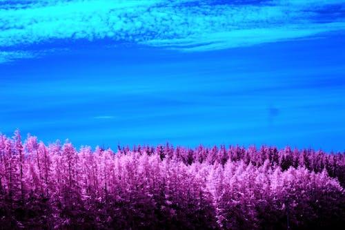 Ilmainen kuvapankkikuva tunnisteilla alba, auringonpaiste, infrapuna-valokuvaus, kesä