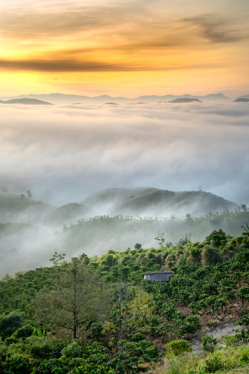 Green mountainous valley with lush trees in cloudy morning