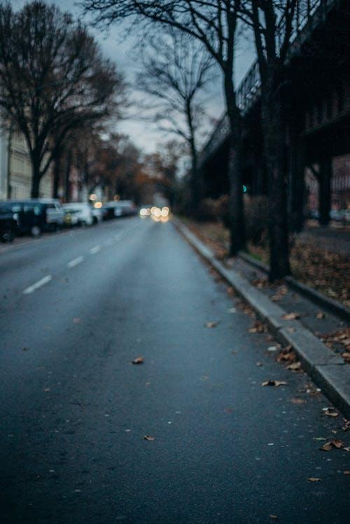 Black Asphalt Road With Trees on Side