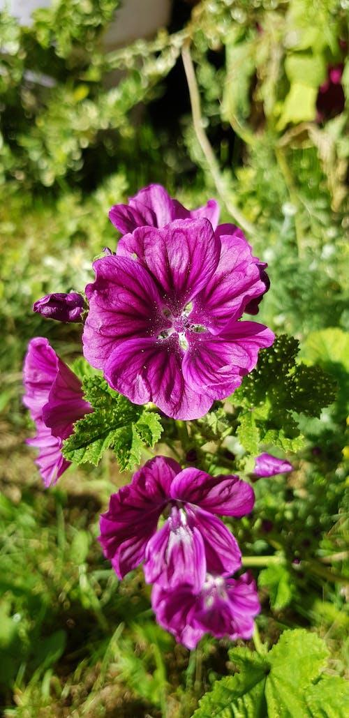 Ảnh lưu trữ miễn phí về cận cảnh, cỏ dại, hoa dại, Hồng