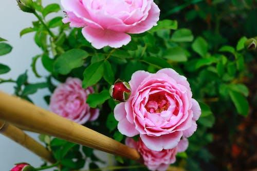 Free stock photo of beautiful flower, bloom, blooming