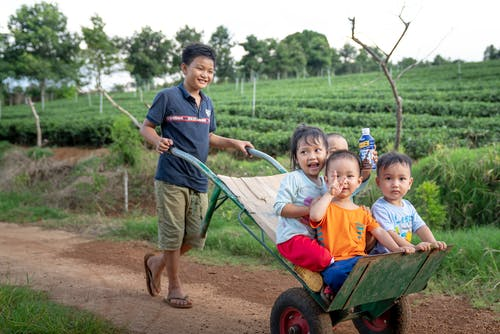 Funny Asian toddlers having fun while brother riding metal wheelbarrow on rural road in green agricultural plantation