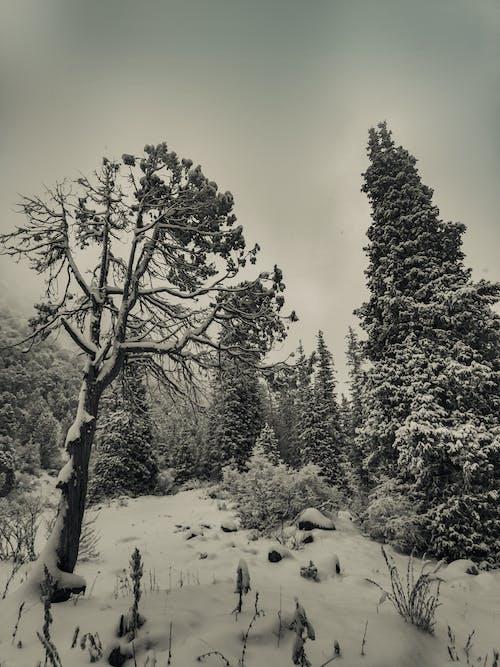 Δωρεάν στοκ φωτογραφιών με δασικός, δάσος, κρύο, κρυολόγημα