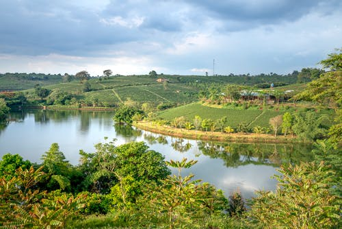 Green trees reflecting in pond located in countryside