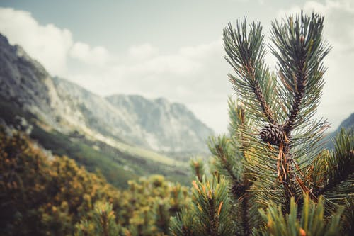 Spectacular view of pine cone on evergreen tree near rough ridge under cloudy sky