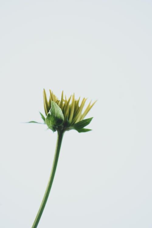 Green Flower in White Background