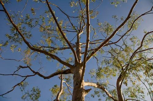 Gratis stockfoto met bladeren, boom, hemelsblauw, tak