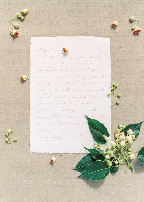 Livre Blanc Avec Des Feuilles Vertes