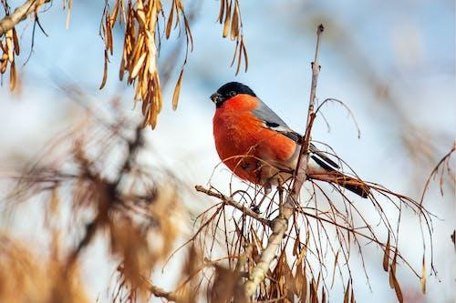 Foto d'estoc gratuïta de a l'aire lliure, ala, angle baix, animal