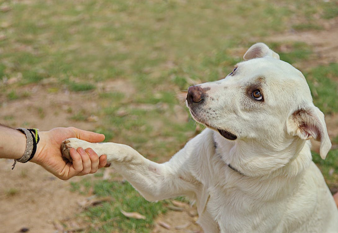 Dog giving paw to anonymous person