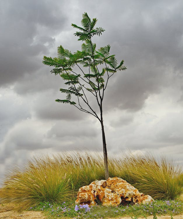 Lonely tree in overcast day