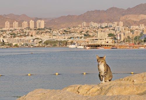 Cat resting on rocky bay shore