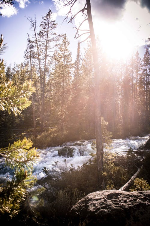 Free stock photo of pine trees, rapids, sunset