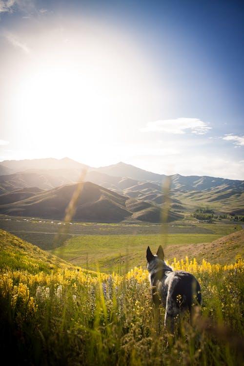 개, 꽃밭, 노란 꽃의 무료 스톡 사진