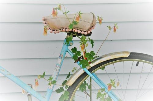 columbine bisiklet içeren Ücretsiz stok fotoğraf