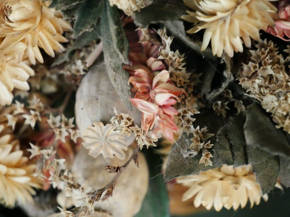 Free stock photo of beautiful flowers, dead flowers, flower vase