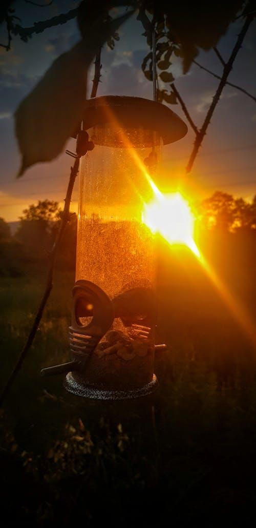 Free stock photo of bird feeder, sunset