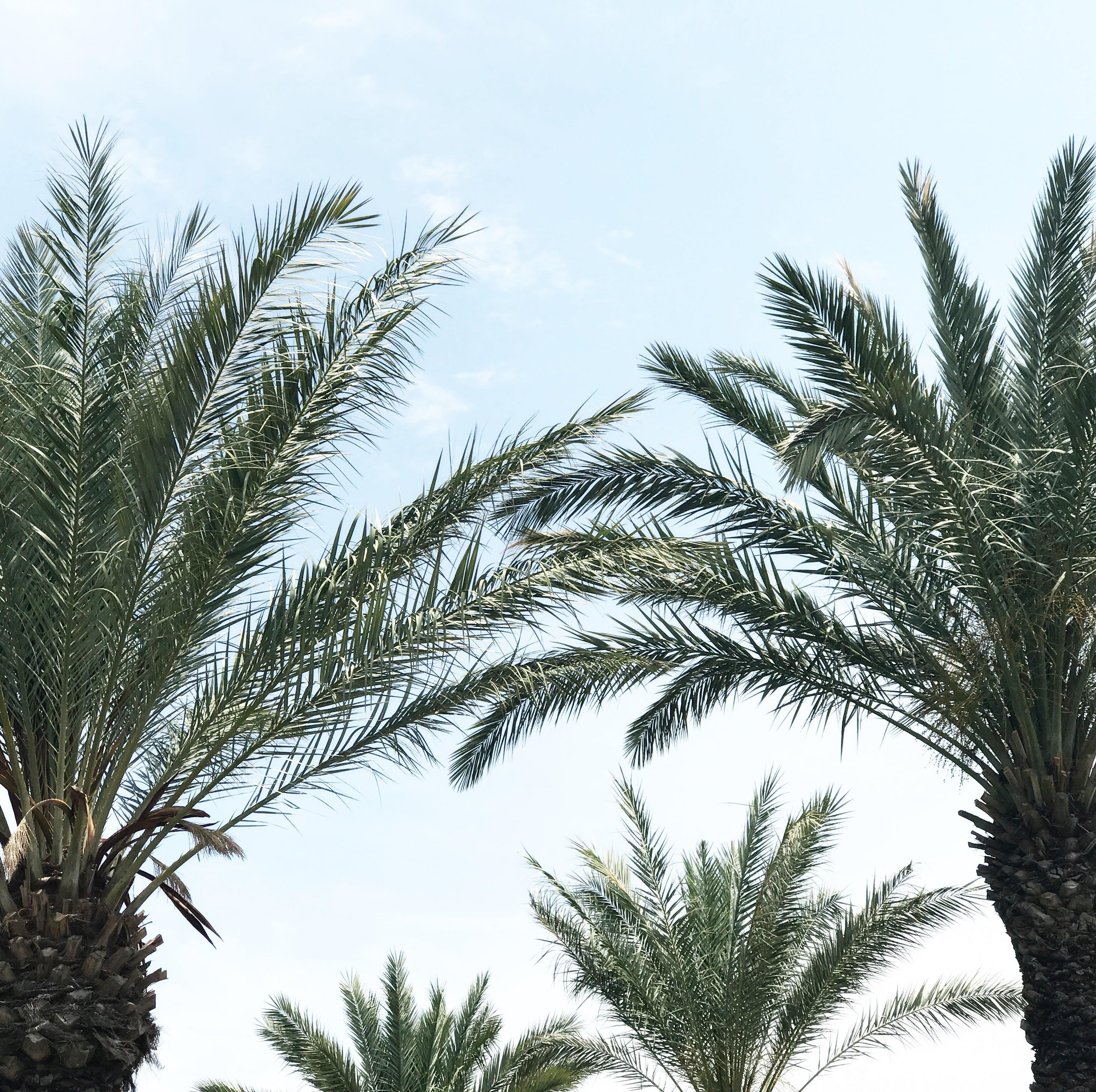 Photos gratuites de arbres, ciel, feuilles de palmier, palmiers