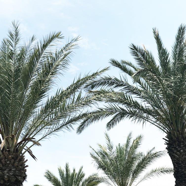 дерева, небо, пальми