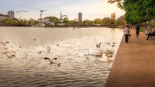 丹麥, 光與影, 動物, 和平 的 免费素材图片