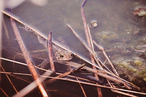 Photos gratuites de algues, amphibien, animal