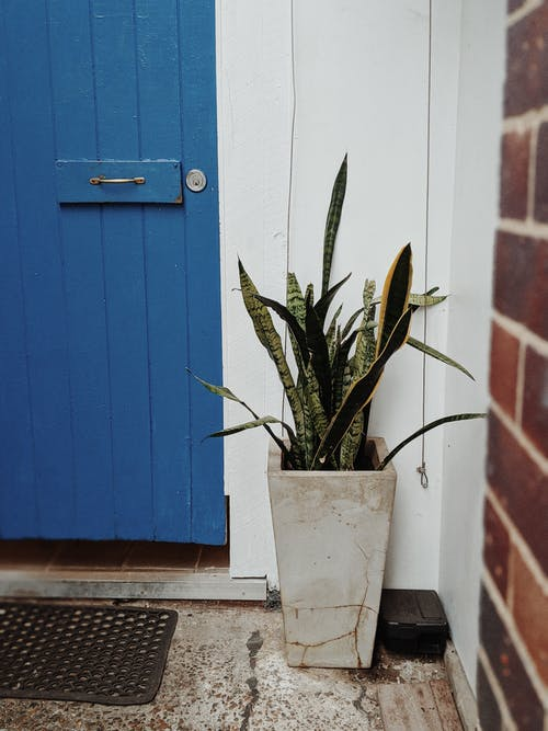 Green Plant in White Pot