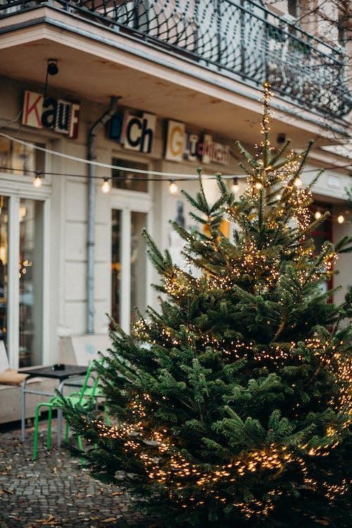 Foto d'estoc gratuïta de a l'aire lliure, ambient nadalenc, arbre