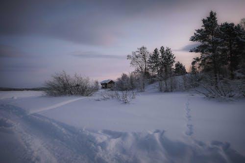 Immagine gratuita di alba, albero, congelato, freddo
