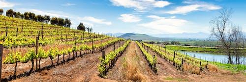 Foto profissional grátis de África do Sul, agricultura, ao ar livre, área