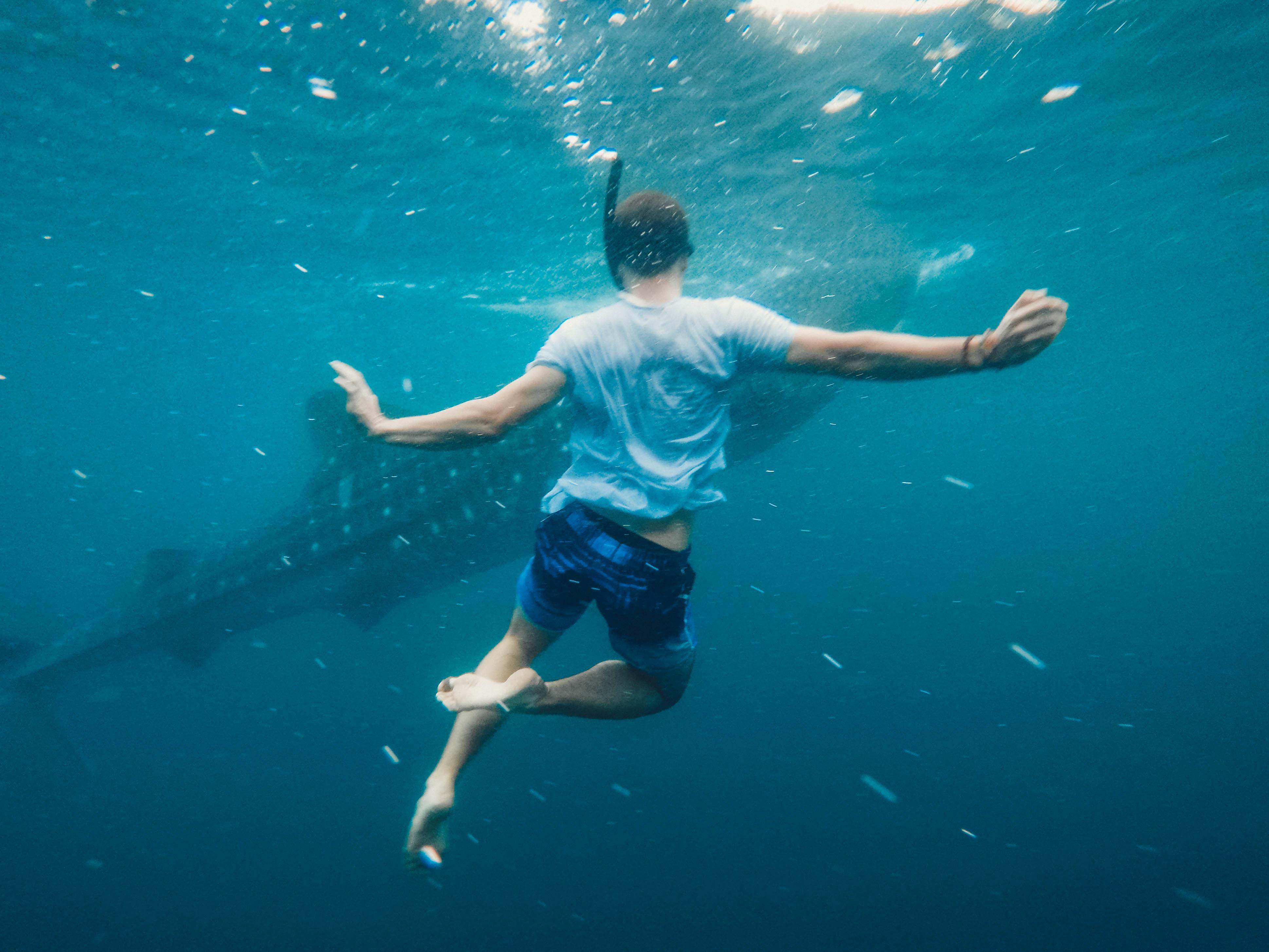 Enjoy swimming with Shark