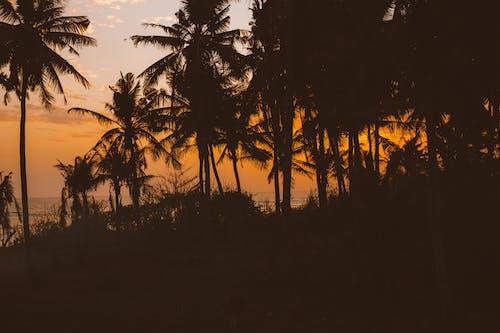 Darmowe zdjęcie z galerii z beztroski, cichy, drzewo, egzotyczny
